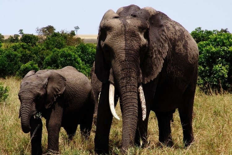 masai mara game reserve