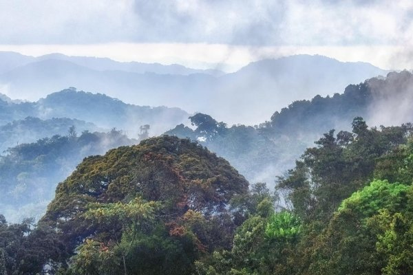 Nyungwe Forest Nationl Park
